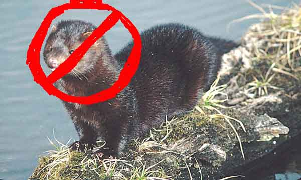 MInk with red circle and a slash (no mink)