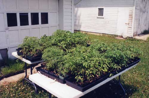 seedlings on a table