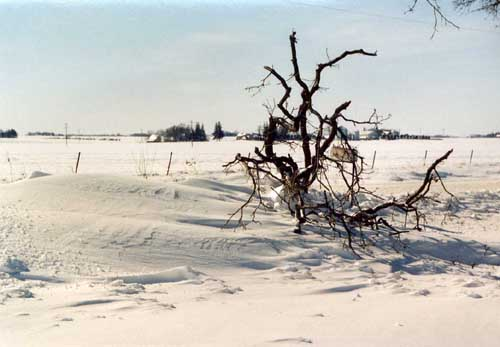 downed limb and a snow drift