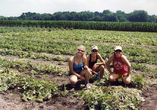 weeding the melons