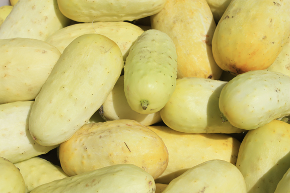 Boothby's Blonde cucumbers